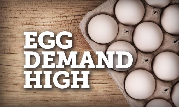 Egg Demand High